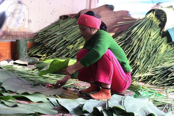 Về nơi hiếm hoi ở Hà Nội trồng lá dong gói bánh chưng kiếm cả trăm triệu dịp Tết 5