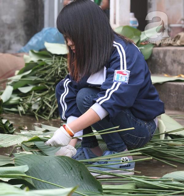 Về nơi hiếm hoi ở Hà Nội trồng lá dong gói bánh chưng kiếm cả trăm triệu dịp Tết 6