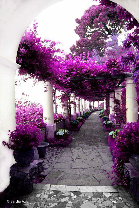 Một con đường đan kết bằng hoa tím, nơi tổ chức đám cưới lý tưởng cho những cặp tình nhân