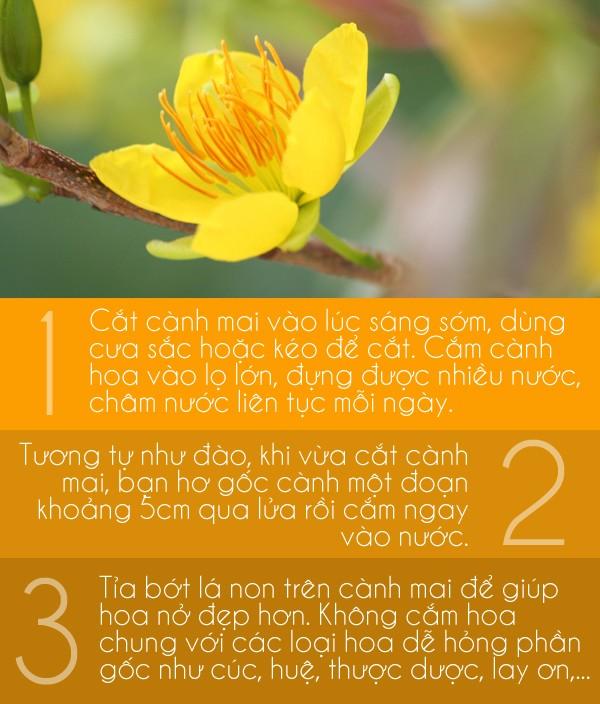 Các mẹo giữ hoa tươi lâu cho ngày Tết 3