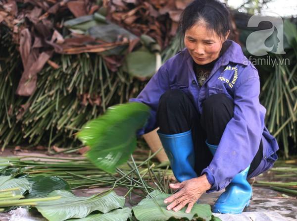 Về nơi hiếm hoi ở Hà Nội trồng lá dong gói bánh chưng kiếm cả trăm triệu dịp Tết 9