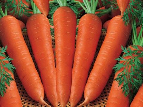 ung thư, ung thư cổ tử cung, chữa bệnh, bệnh, bệnh hiểm nghèo, trị bệnh, thực phẩm, món ăn, ẩm thực, cà rốt, cá hồi, trà, bông cải xanh