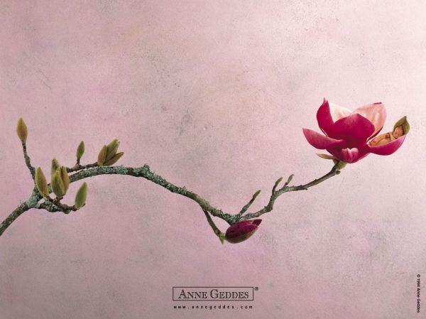 Thêm những bức ảnh đẹp lung linh của bé và hoa 16