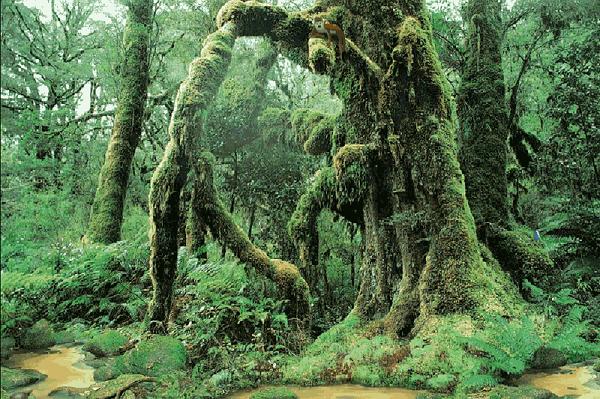 Những truyền thuyết kỳ quái trong rừng rậm Amazon 5