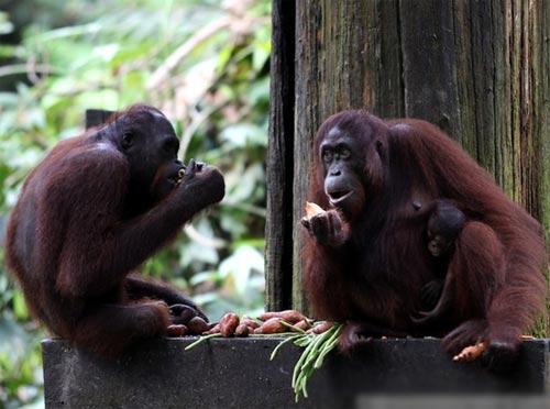 Malaysia là nhà của nhiều loài động vật hoang dã quý hiếm. Ảnh: CNN.