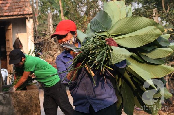 Về nơi hiếm hoi ở Hà Nội trồng lá dong gói bánh chưng kiếm cả trăm triệu dịp Tết 14