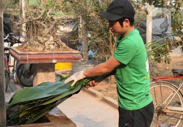 Về nơi hiếm hoi ở Hà Nội trồng lá dong gói bánh chưng kiếm cả trăm triệu dịp Tết 7