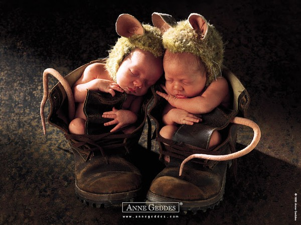 Ngẩn ngơ với chùm ảnh bé sinh đôi tuyệt đẹp 1