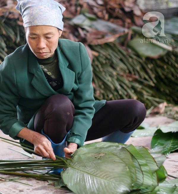 Về nơi hiếm hoi ở Hà Nội trồng lá dong gói bánh chưng kiếm cả trăm triệu dịp Tết 8