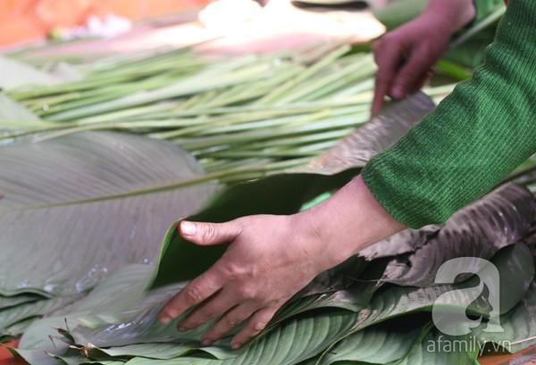 Về nơi hiếm hoi ở Hà Nội trồng lá dong gói bánh chưng kiếm cả trăm triệu dịp Tết 10