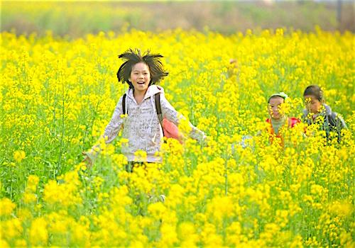 Cánh đồng hoa cải vàng rực ở vùng tự trị dân tộc Choang, Quảng Tây (Trung Quốc).