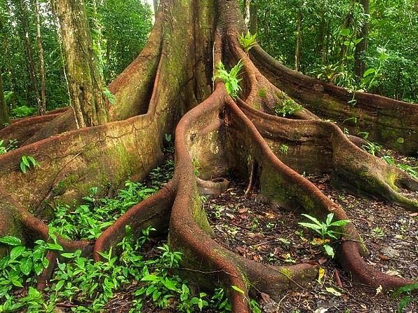 Những truyền thuyết kỳ quái trong rừng rậm Amazon 4