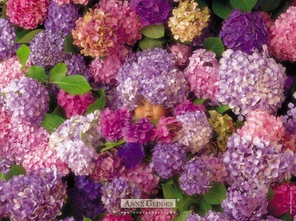 Thêm những bức ảnh đẹp lung linh của bé và hoa 14