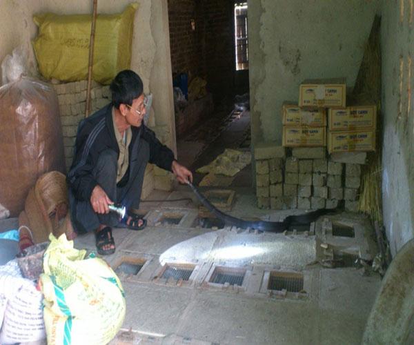 Nghề nuôi rắn cũng đang lan rộng khắp các tỉnh, Làng rắn Phụng Thượng thuộc huyện Phúc Thọ (Hà Nội), giáp Sơn Tây nôi tiếng chỉ nuôi độc một loại là rắn hổ chúa, loài rắn khổng lồ trong sách đỏ