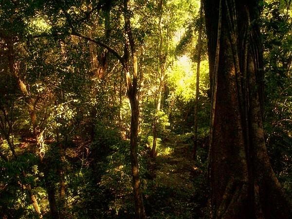 Những truyền thuyết kỳ quái trong rừng rậm Amazon 1
