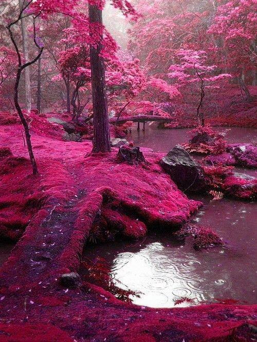 Chiếc cầu Moss Bridges tại Ireland khi trải lên tấm thảm tím hồng đẹp như chốn bồng lai