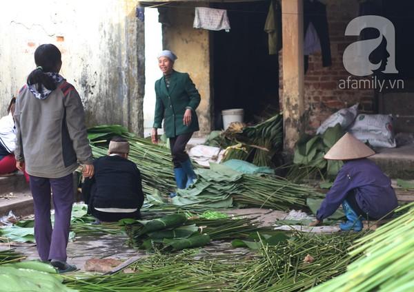 Về nơi hiếm hoi ở Hà Nội trồng lá dong gói bánh chưng kiếm cả trăm triệu dịp Tết 12
