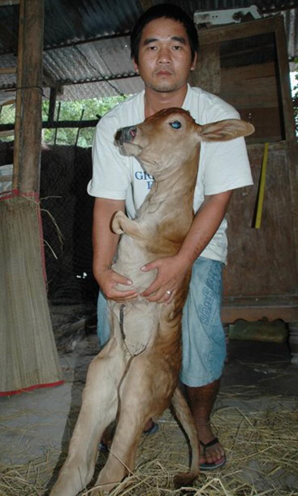 10 sinh vật kỳ quái được phát hiện tại VN năm 2012 11