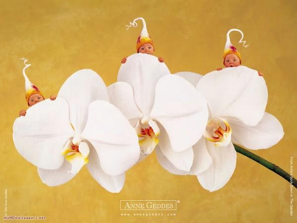 Thêm những bức ảnh đẹp lung linh của bé và hoa 2