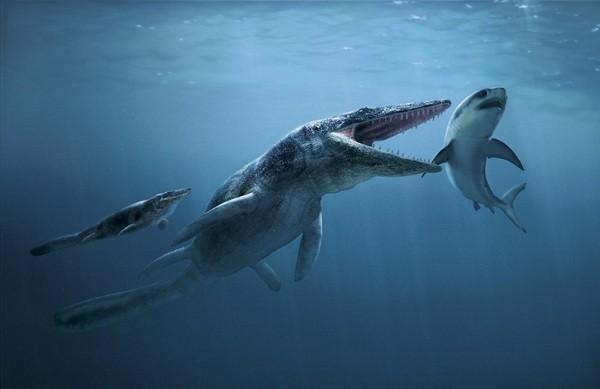 """Cận cảnh """"quái vật"""" đại dương thời tiền sử 6"""