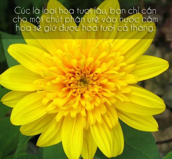 Các mẹo giữ hoa tươi lâu cho ngày Tết 6