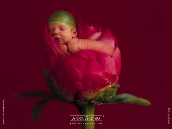 Thêm những bức ảnh đẹp lung linh của bé và hoa 12
