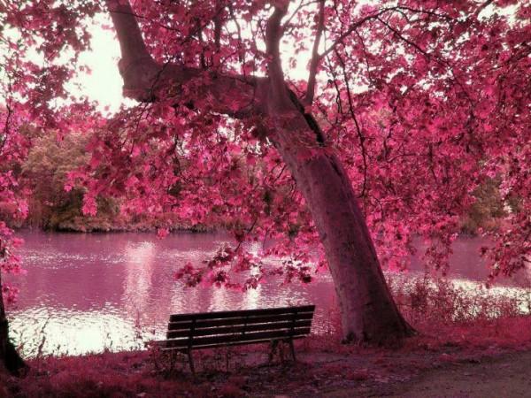 Một góc yên bình và vẫn đầy chất thơ