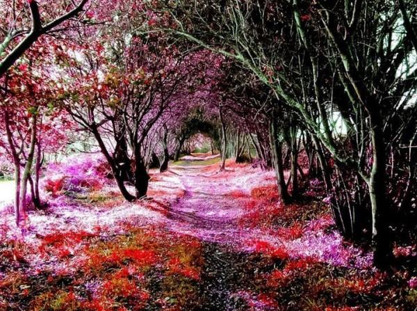 Con đường trải hoa tím hồng đi vào xứ sở thần tiên
