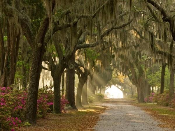 Săn ma ở Savannah, Georgia: Savannah là một trong những thành phố đẹp nhất miền Nam nước Mỹ, với tour tham quan các địa điểm ma ám nổi tiếng như nghĩa trang Công viên Colonial, nghĩa trang Bonaventure và nhà của Mercer Williams... vào buổi đêm.